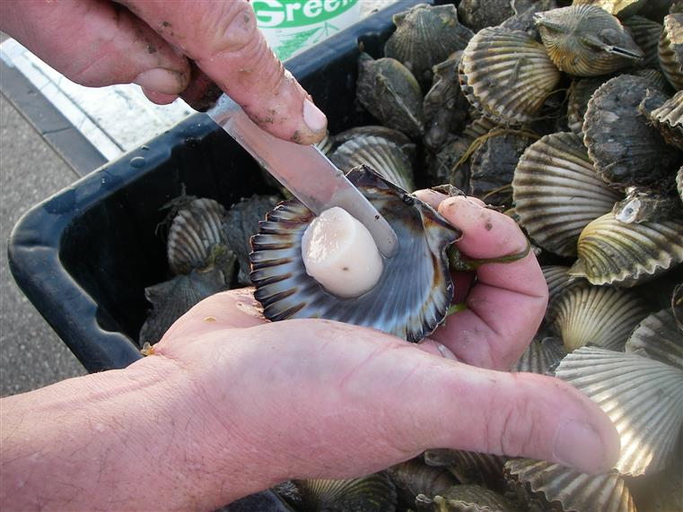 Man shucking clams over a bin of clams