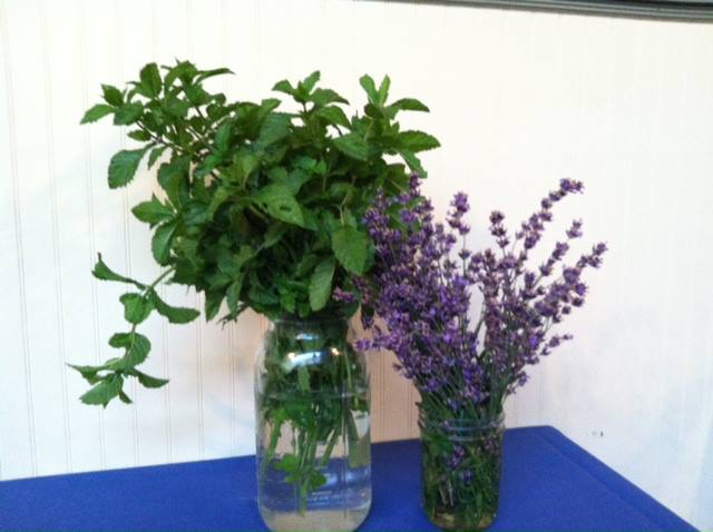 Lavender and plants in a flower pot