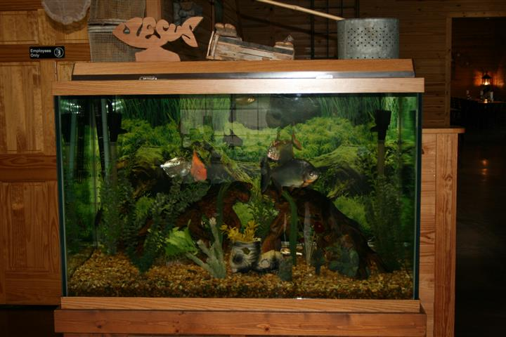 Fish tank with decorations