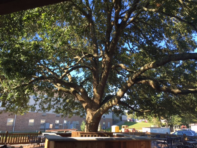 Tree, tables, outdoor area