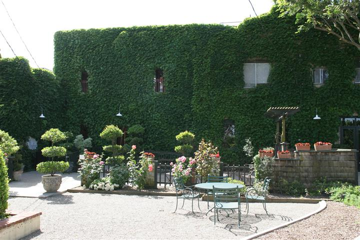 Ivy covered building wall with table and chairs