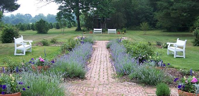 Pathway with lavender to the sides