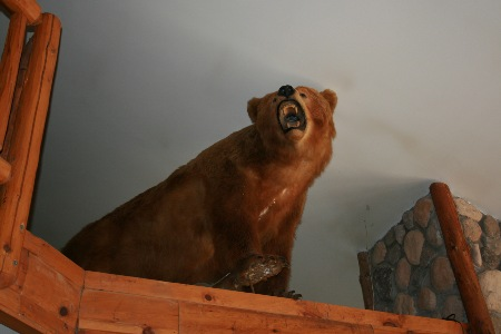 Taxidermied bear on ledge, close to ceiling.