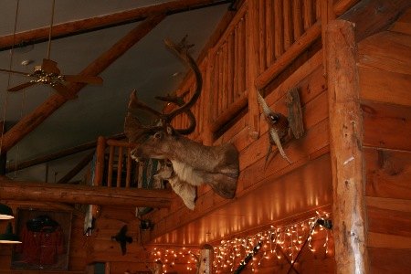 Taxidermied deer head on wall next to other taxidermied animals.