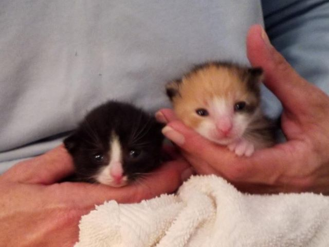 fred and ginger kittens