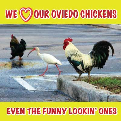 ---- FUNNY-LOOKIN-CHICKEN-WEB-PAGE (large)