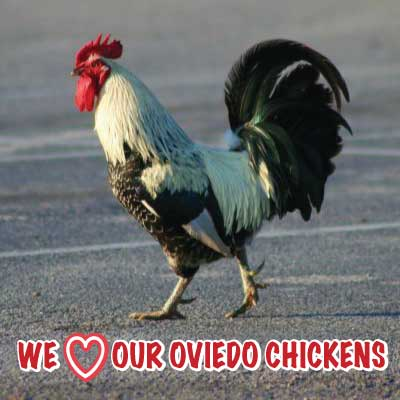 ---- LOVE-CHICKENS-WEB-PAGE (large)