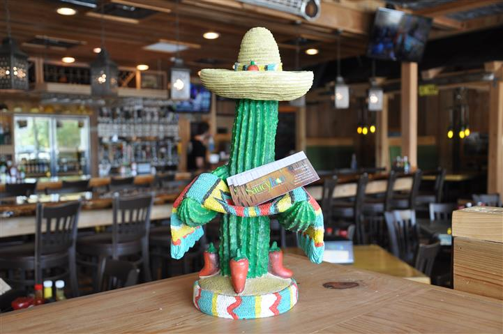 Cactus wearing a sombrero with a saucy taco card