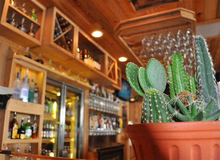 Cactus on table with alcoholic beverages in the background