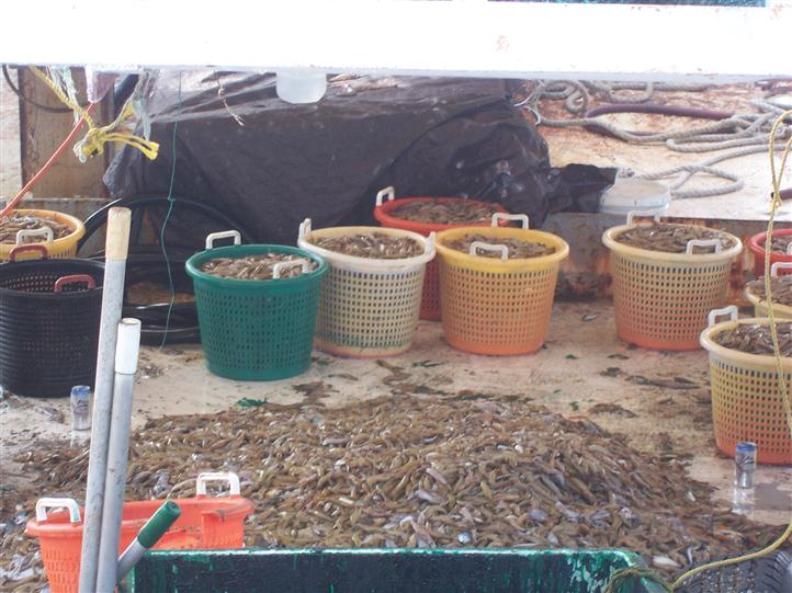 Buckets full of fish