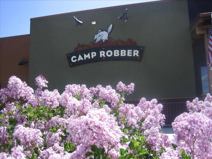 Camp Robber