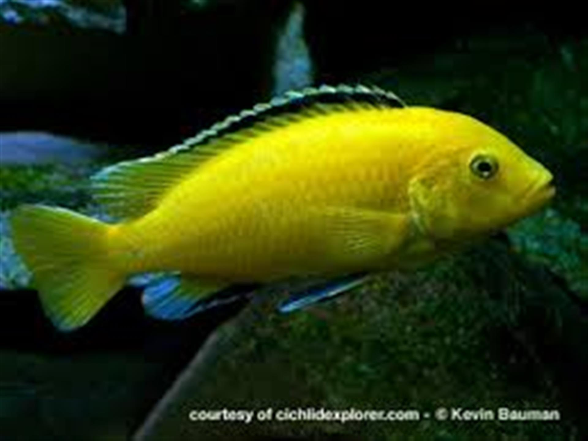 Freshwater fish tank yellow water -  Utils Extractimagename Widgetimages Key