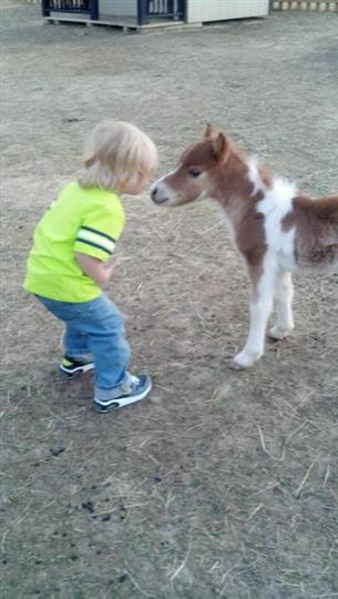 a little boy next to a baby pony