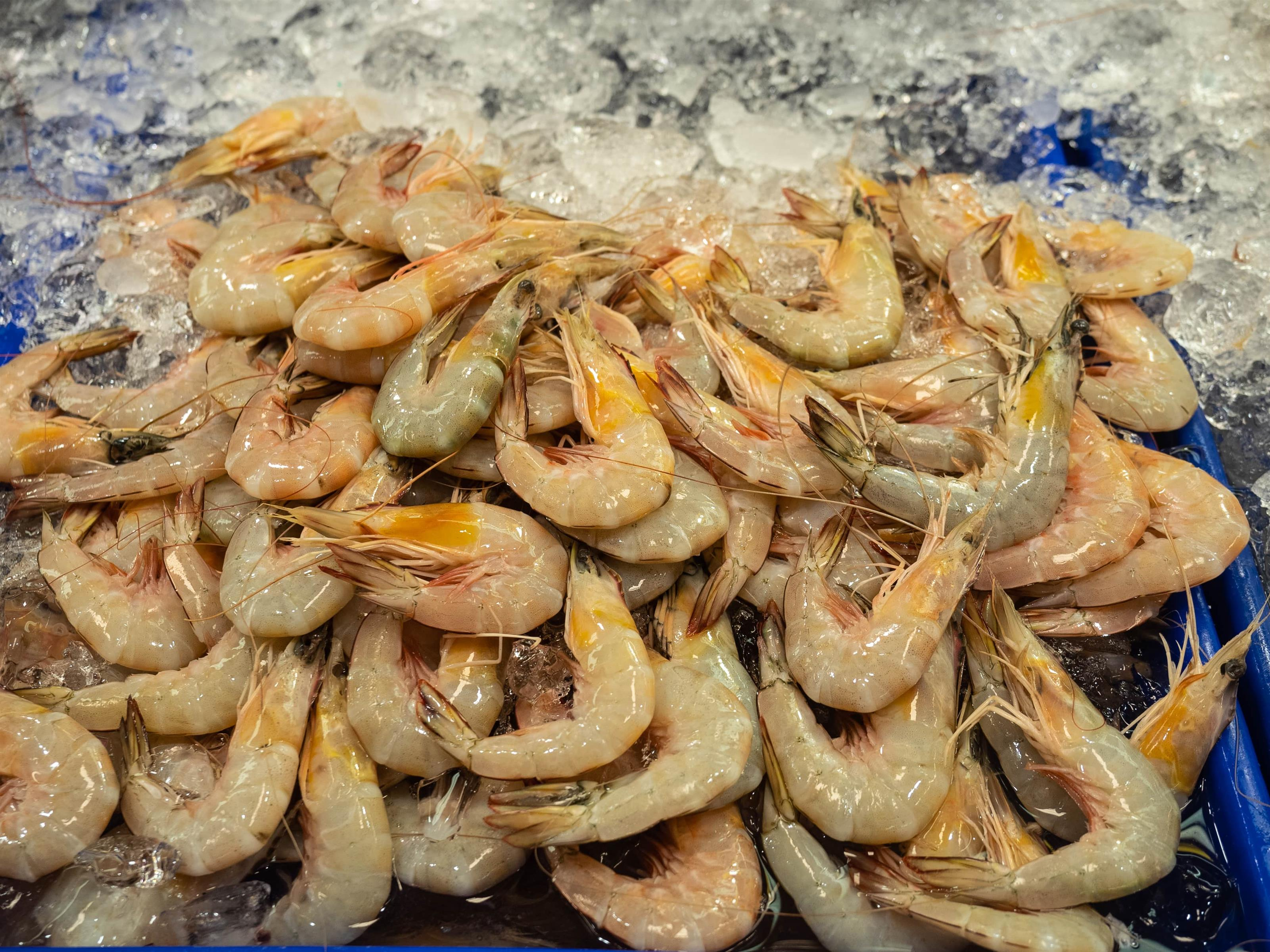 Raw shrimp on bed of ice