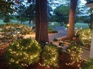 shrubs decorated with white lights