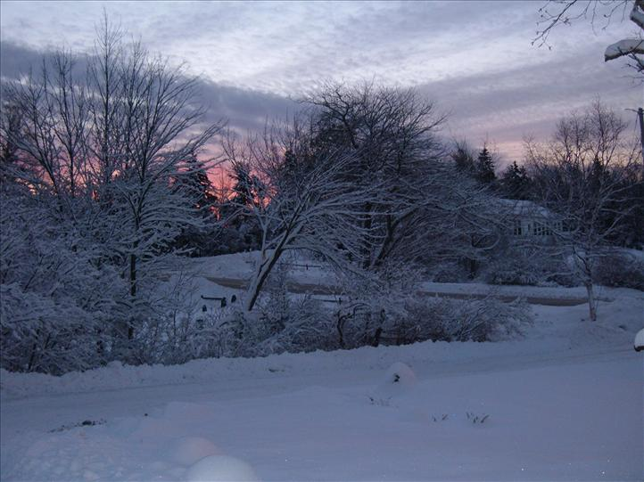Snow on Trees with Sunrise in Background
