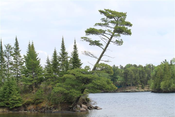view of the lake with trees  and rocks around the shore