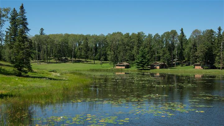 pond surrounded by grass and trees