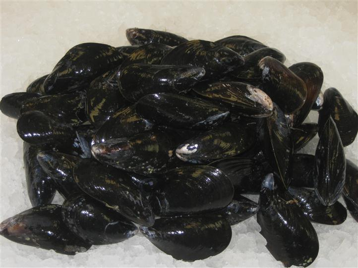 Mussels in a ice bath