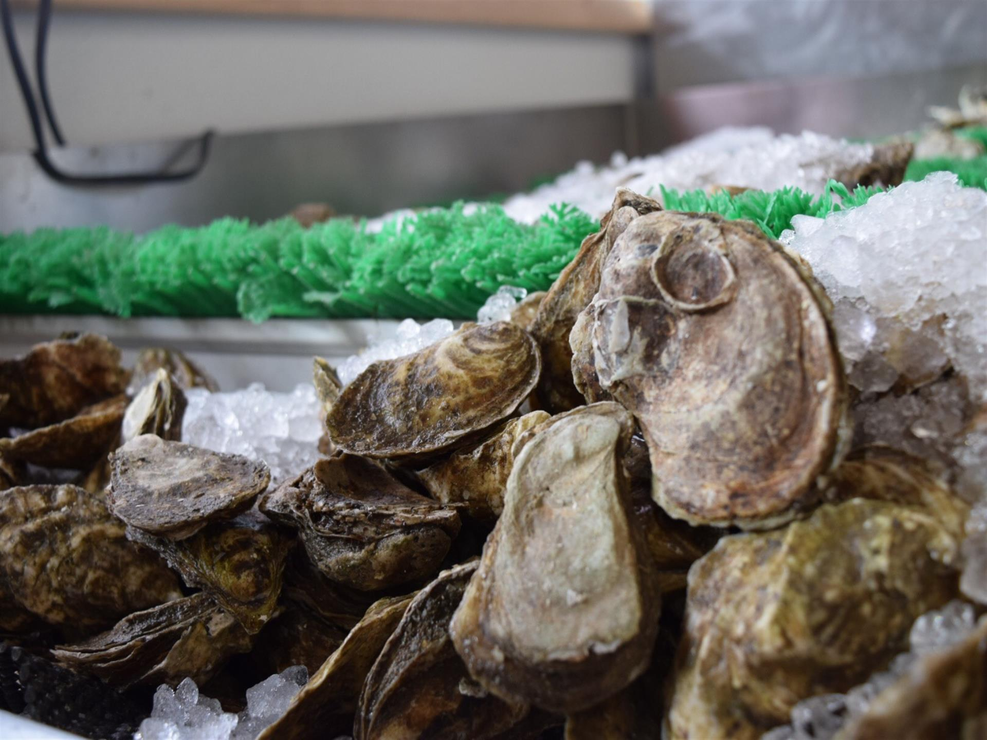 Pemaquid Oysters