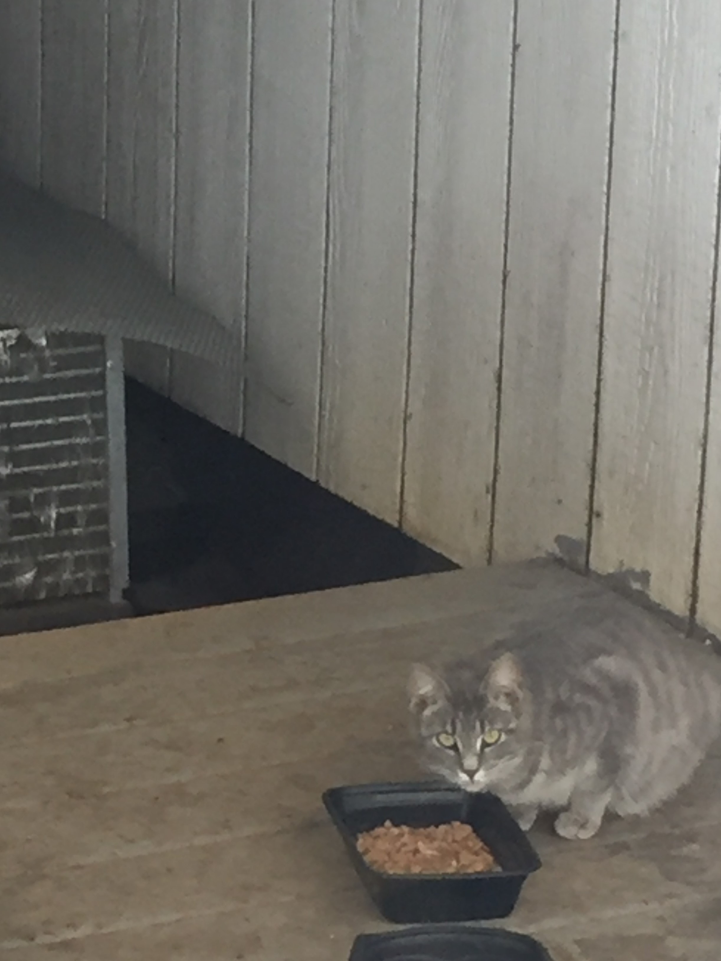Cuddles the cat about to eat from food bowl