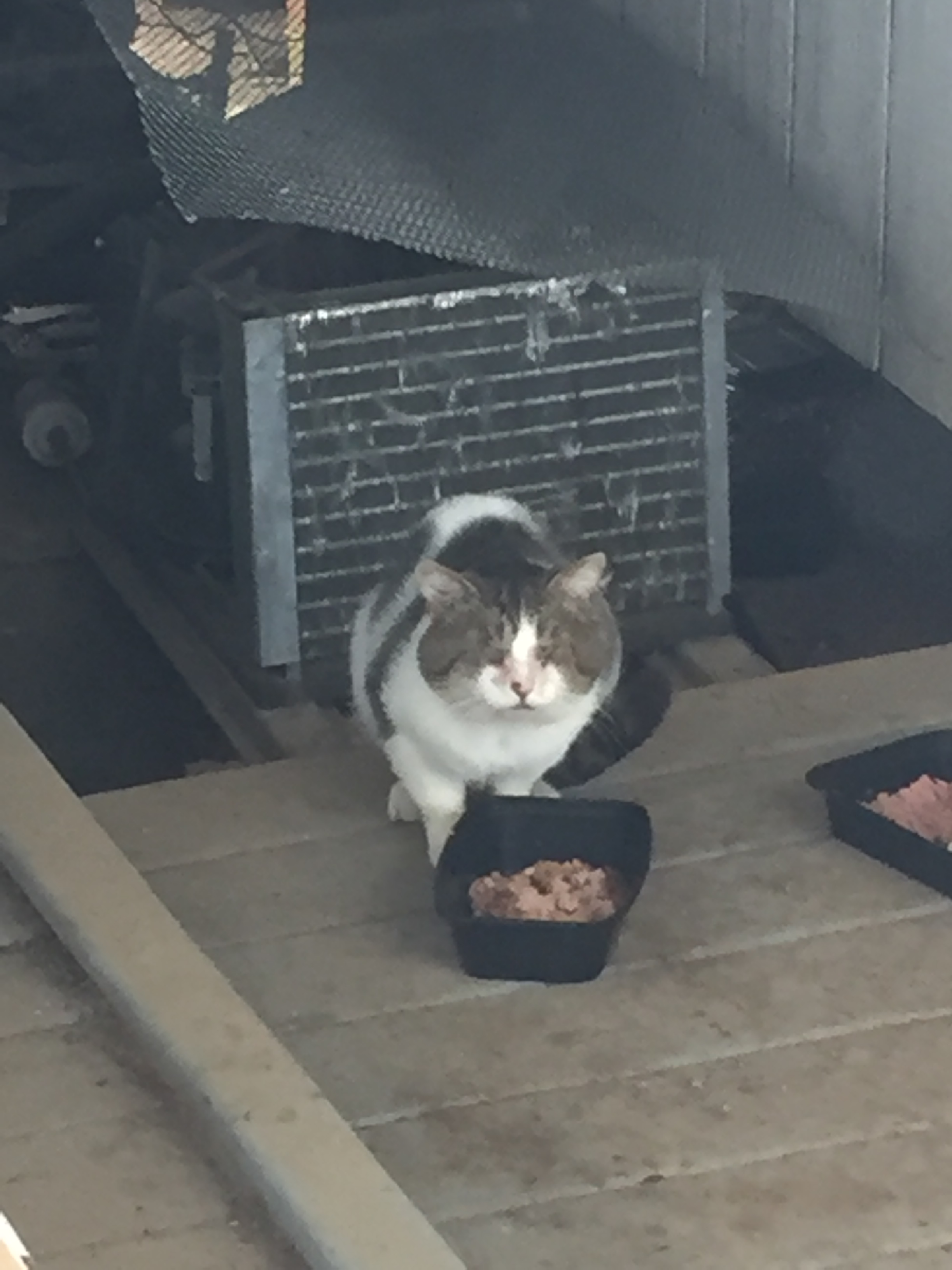 Greg the cat sitting in front of food dish.