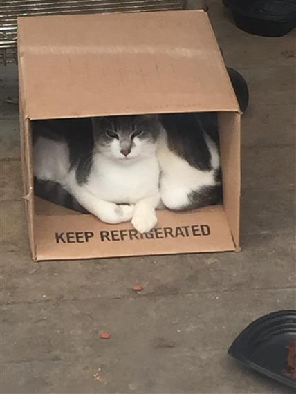 Cats Harry and Angelina in cardboard box