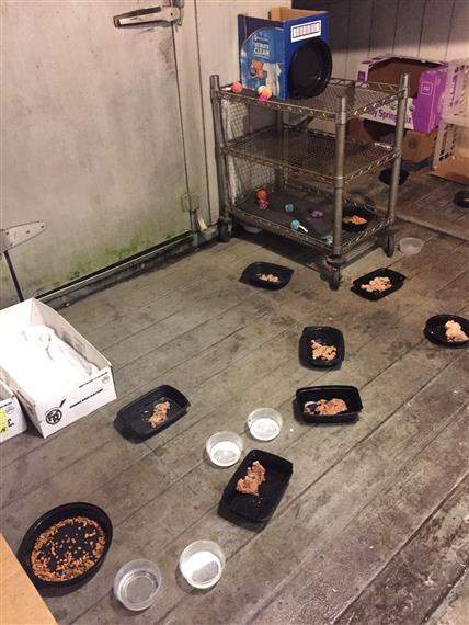 "One of Kaye's MANY ""Cat buffets"" daily! Bowls of cat food and water on floor."