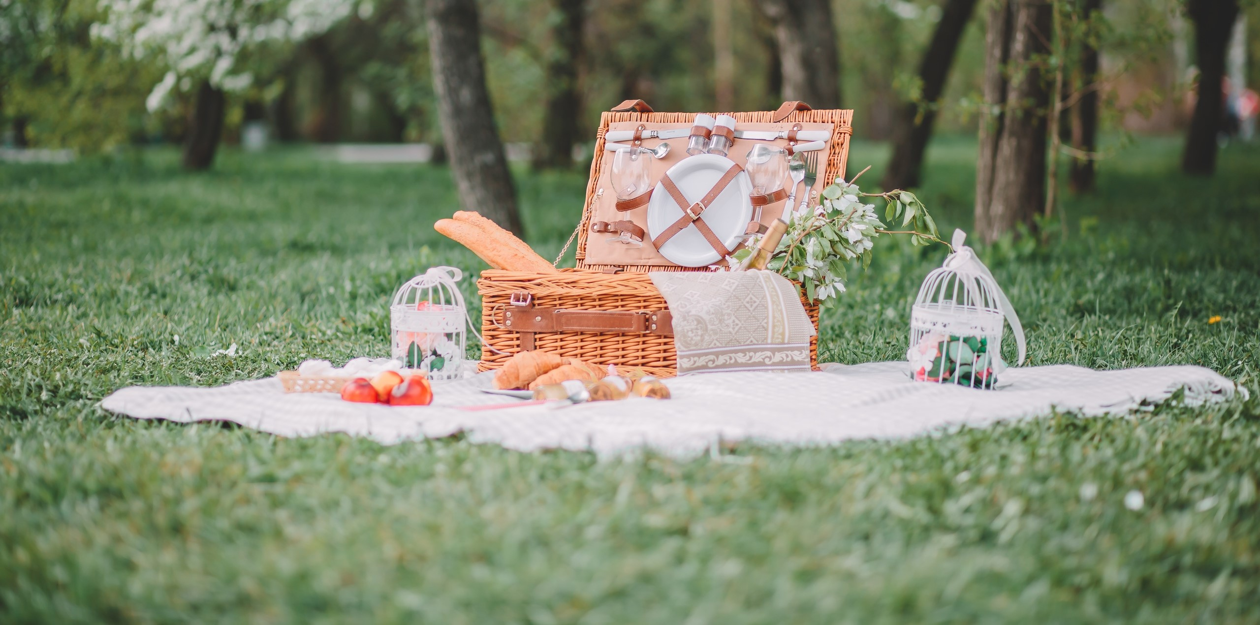 a cozy picnic in nature, in the park, a summer picnic cropped