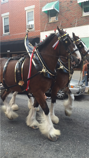 clydesdale horses outside the restaurant