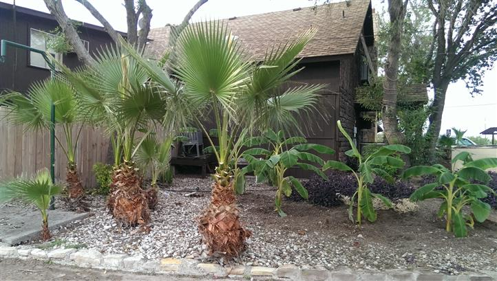 palm trees outside of restaurant