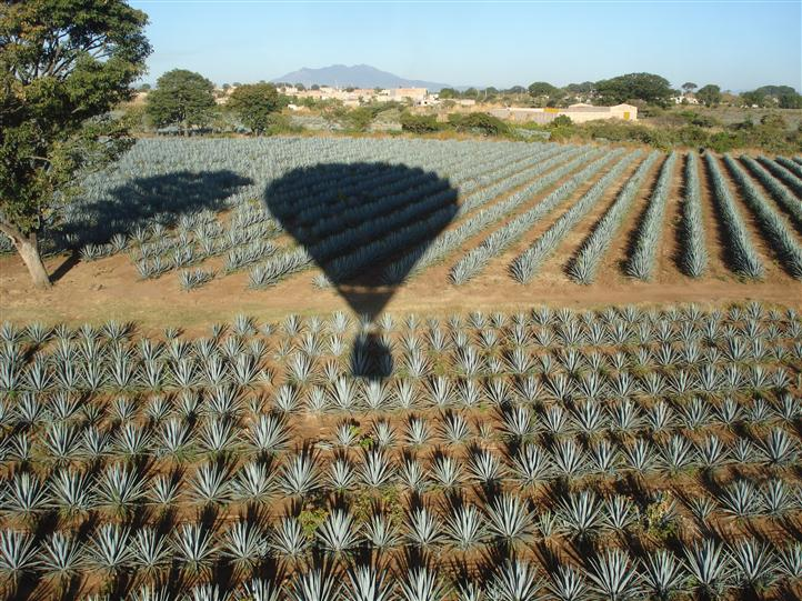 A ballon flying over agave plantations