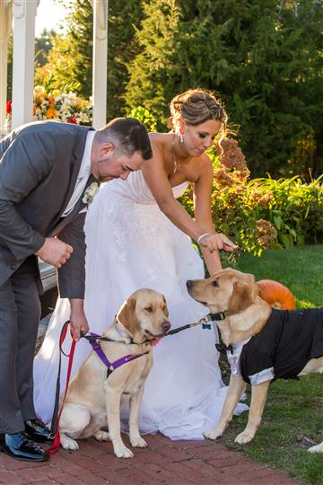 bride and groom with dogs on leashes dressed up in outfits
