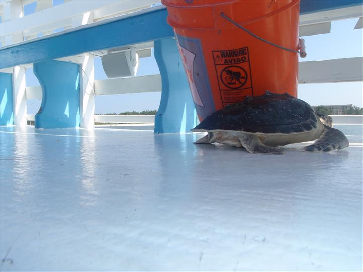 turtle on the boat