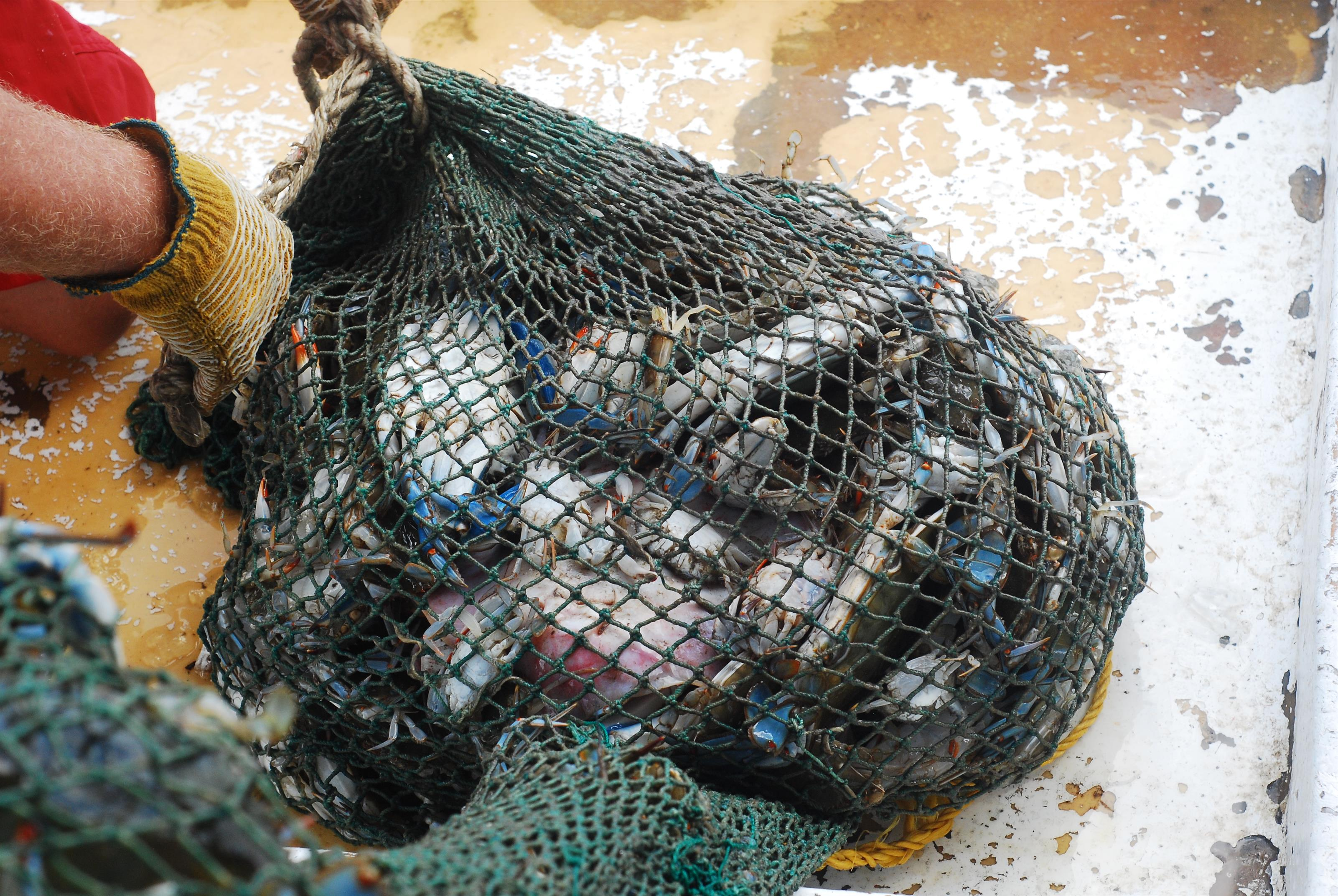 fish and seafood in a net