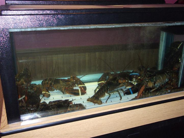 Lobster glass display