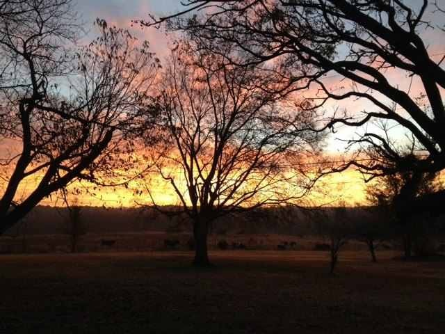 Photo of sunrise behind a tree