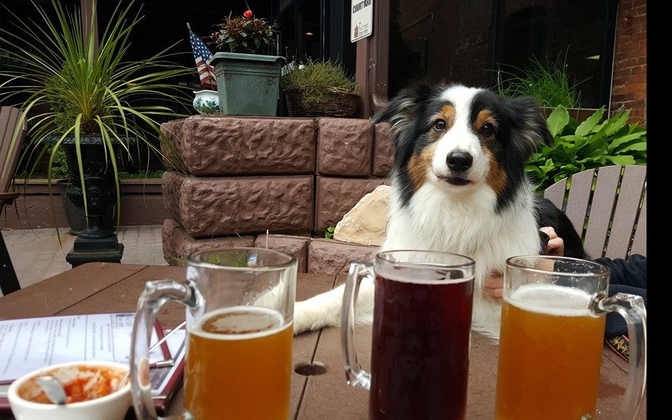 a dog sitting at the table with 3 beers on the table