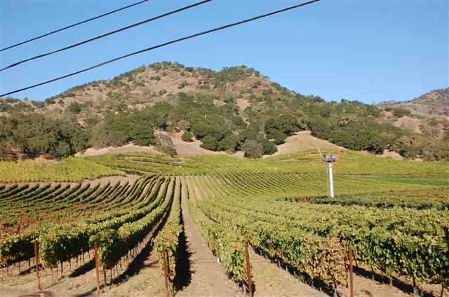 Large image of the whole vineyard