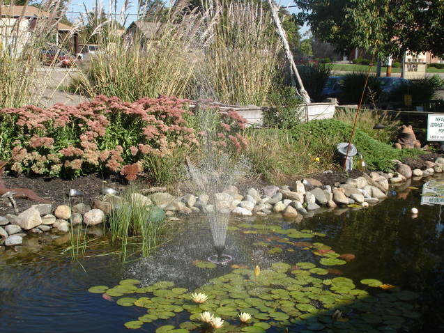 Pond with water spraying out of it