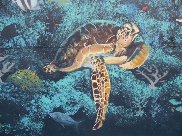 Painting of Atlantic green sea turtle