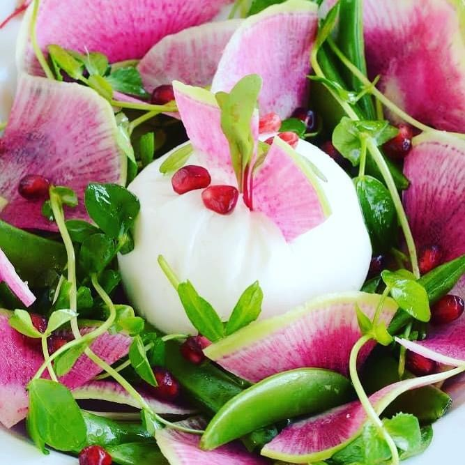 Watermelon Radish & Burrata Salad
