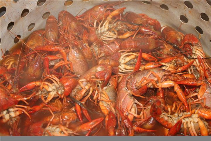 Photo of a steamed crawfish broil