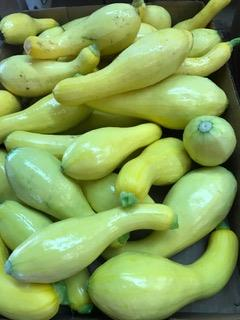 Summer Squash stacked on each other