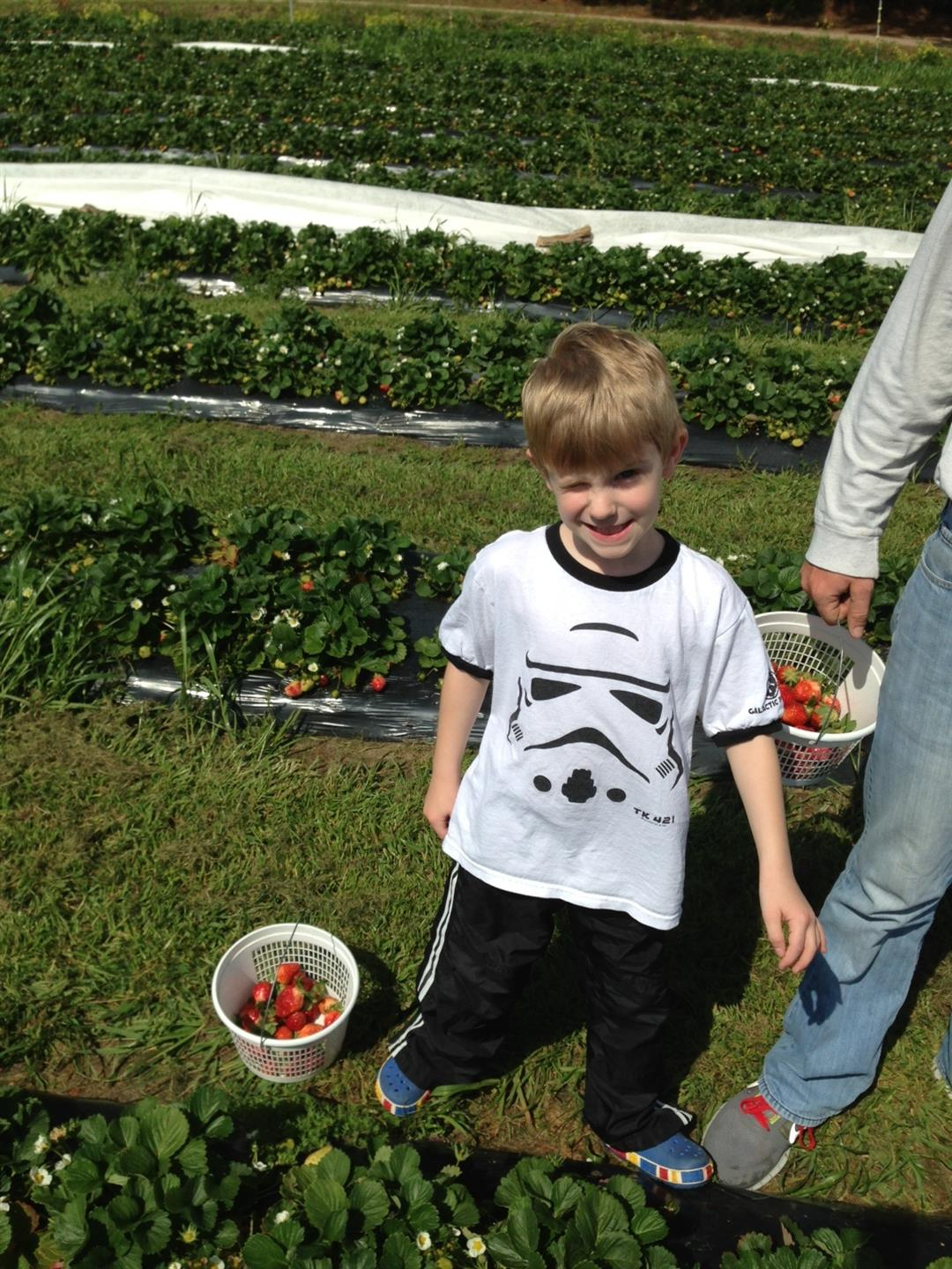 Small child smiling for a photo while in the midst of picking strawberries