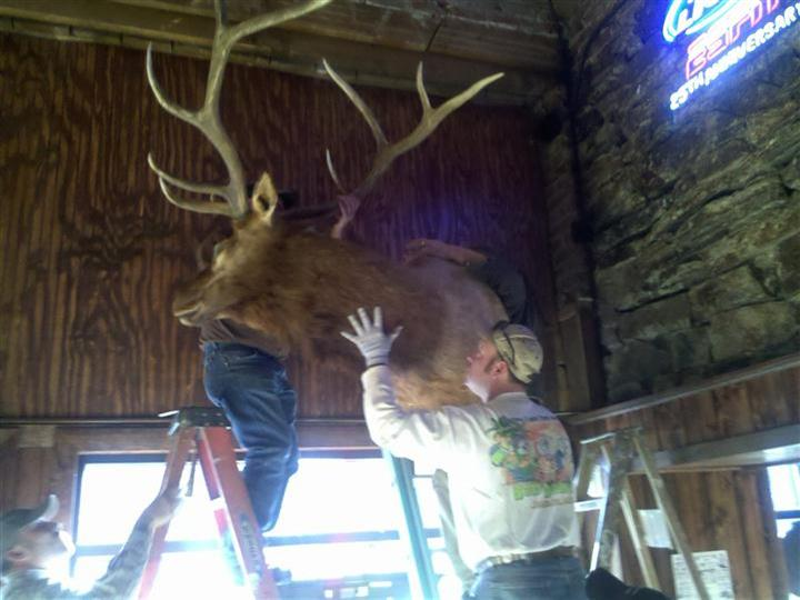 Two men putting taxidermied deer head on wall