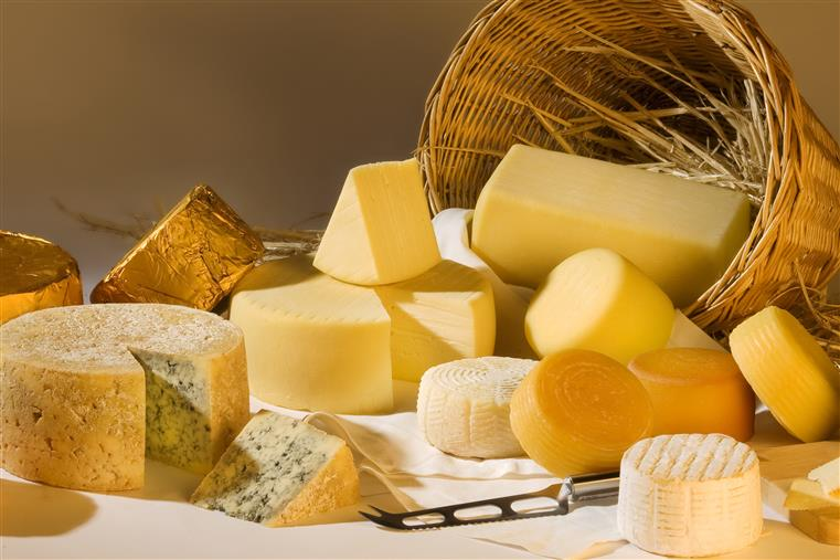Variety of hard cheeses on white table