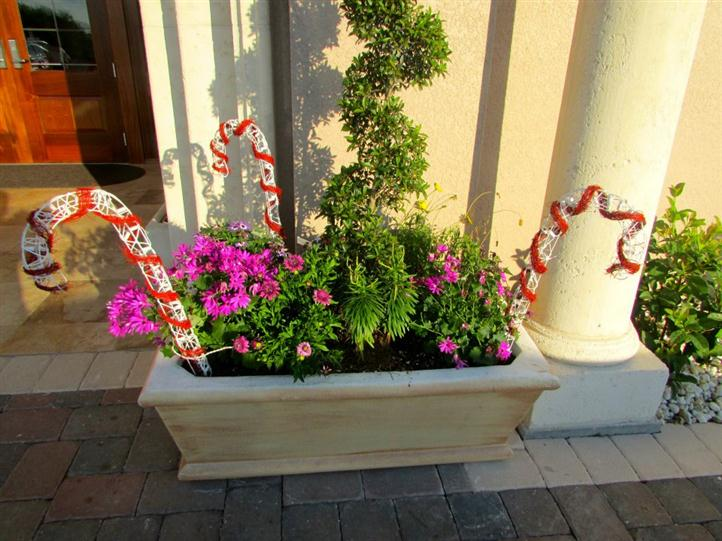 different plants and flowers in large flower pot