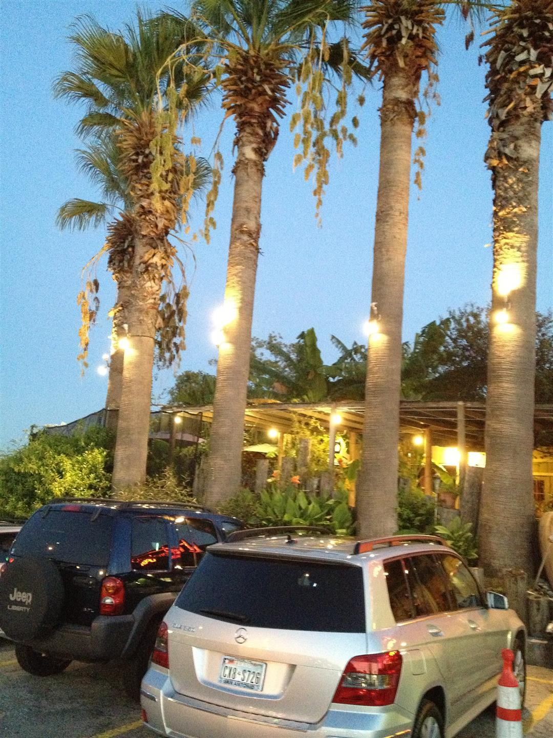 Cars in parking lot next to palm trees