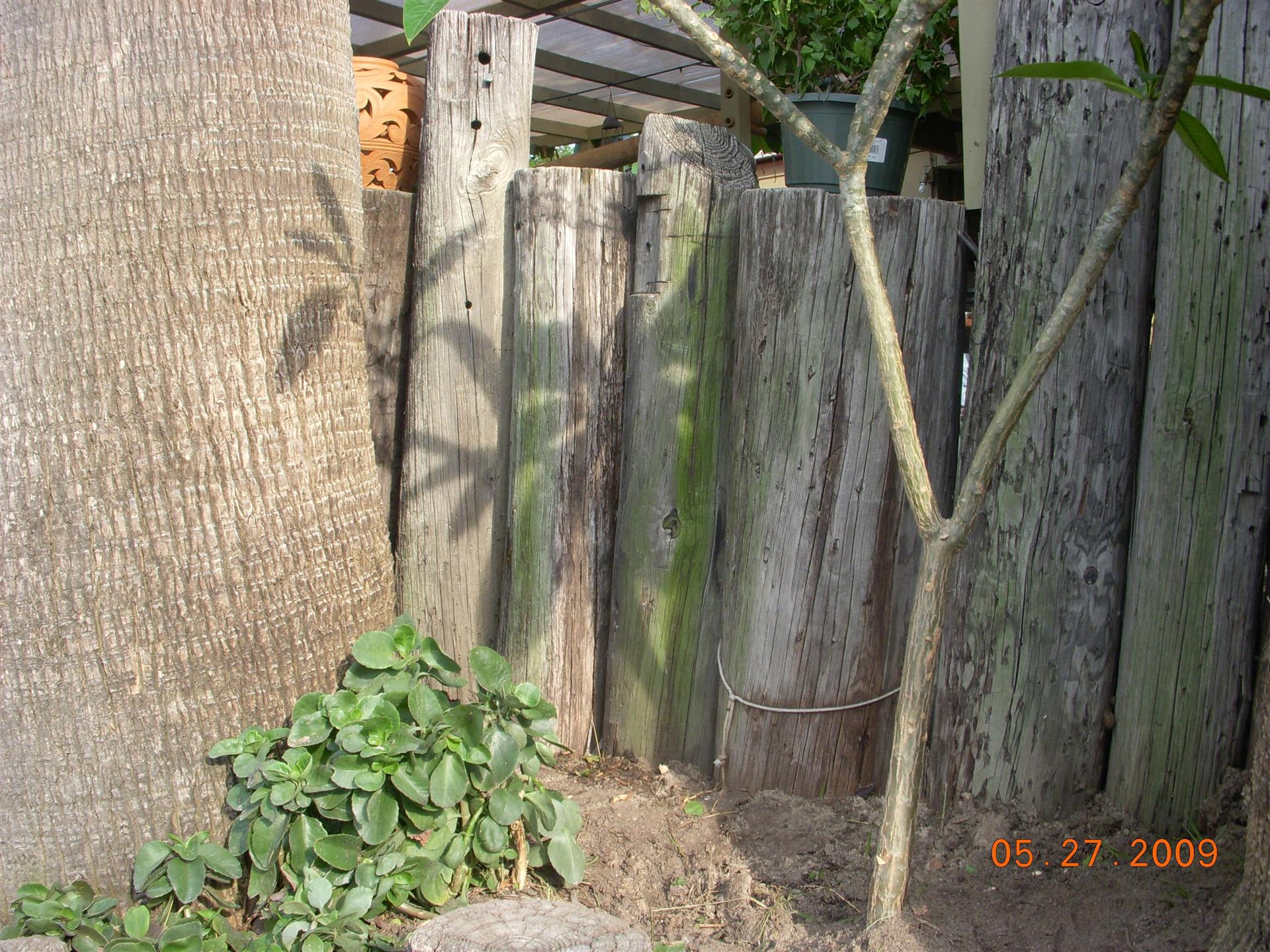 Wooden fence next to tree sapling